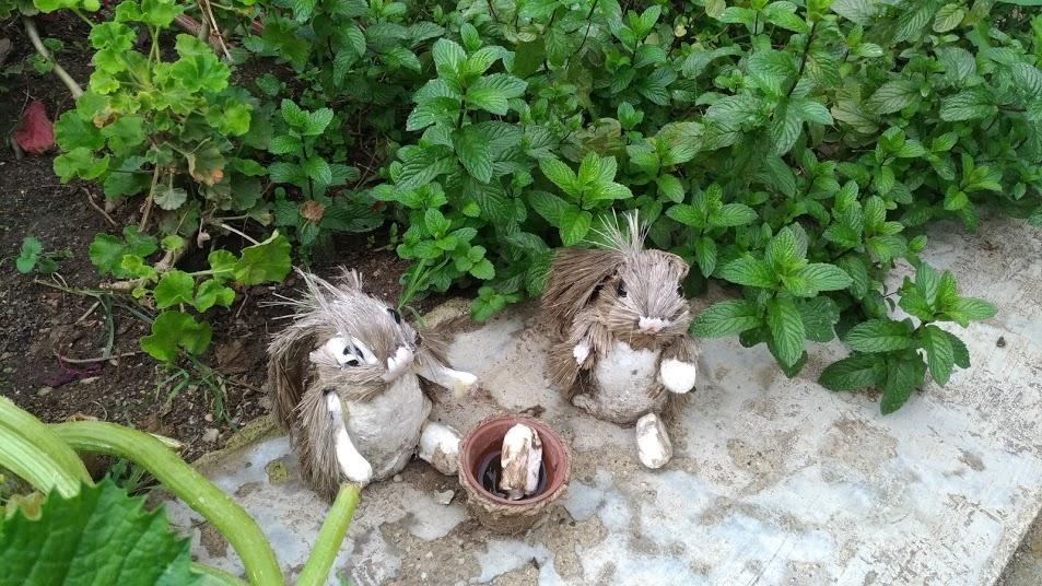 Foto coniglietti Real Giardino in verde - Associazione ViviAdriano